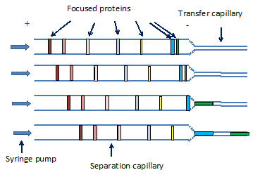 Schematic of column diameter transformation imaging cartridge