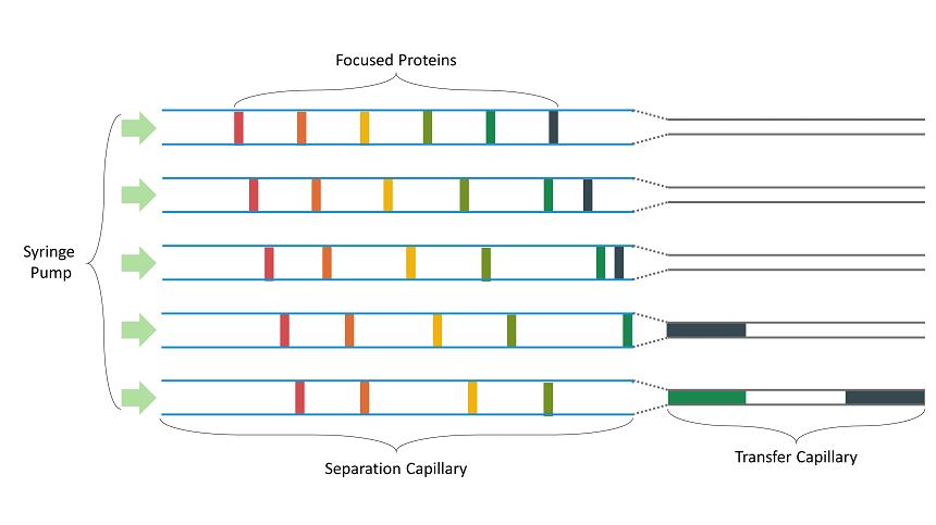 Figure 1. Illustration of capillary diameter transfer technology (CDTT) maintaining the separation of focused peaks