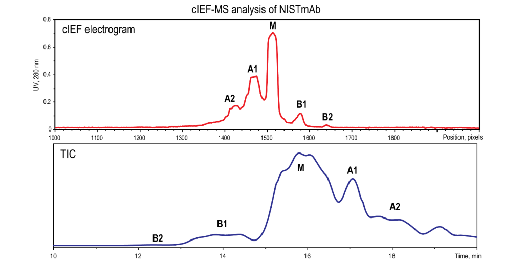 Figure 1. NISTmAb Reference Material: CIEF Electropherogram (top) and Total Ion Current (TIC) MS Chromatogram from On-Line iCIEF-MS (bottom)